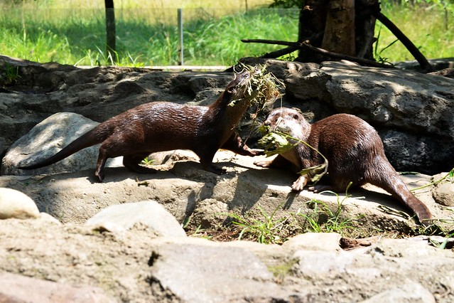 OTTERS at WORK