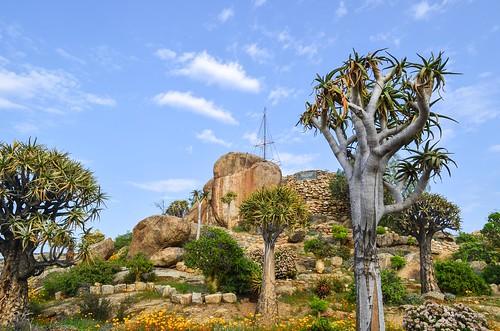 Klipkoppie, Springbok