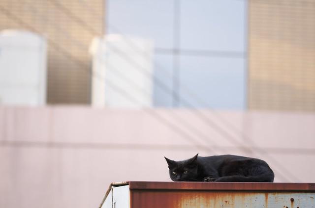 東京路地裏散歩 谷中・日暮里 ネコ 2014年9月6日