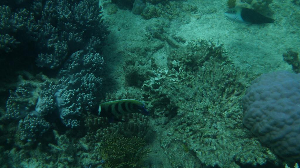 cape tribulation, cape tribulation beach, ocean safari, great barrier reef, mackay reef, snorkelling