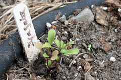 fall seedlings_9639