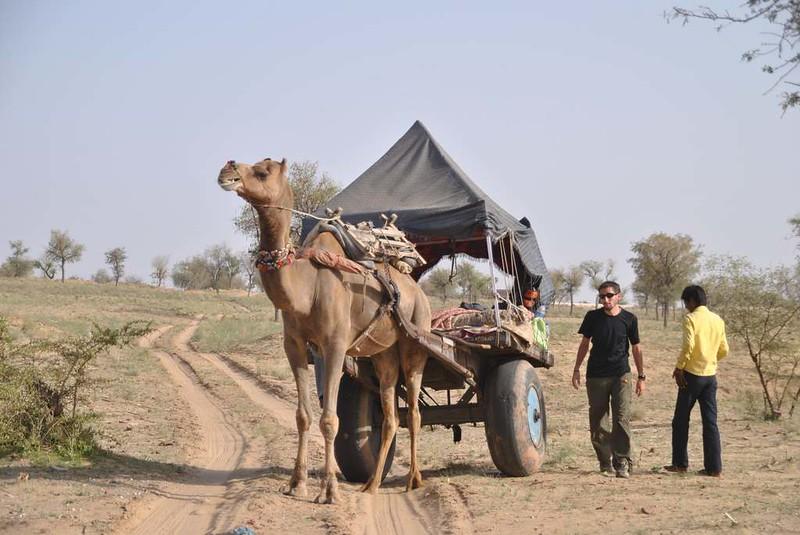 334 Camel safari a Jaisalmer (121)