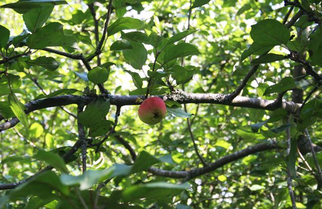 Omenapuilla6