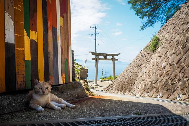 Island Cat #16