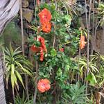 Garten La Luna Baila