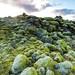 Iceland - Moss field
