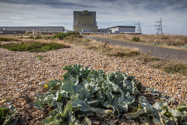 Sea Kale And Nuclear Power