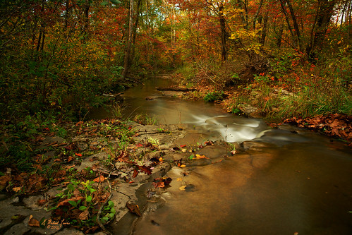 autumn trees color fall nature water leaves creek forest landscape outdoors woods midwest scenery stream h2o missouri ozarks