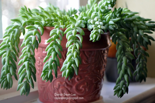 5 tips to grow succulents indoor