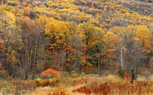 autumn trees mountain nature field grass forest landscape hiking pennsylvania hill foliage creativecommons deciduous grassland slope bluemountain appalachianmountains kittatinnymountain carboncounty lehighgap lehighgapnaturecenter