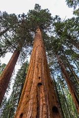 Kings Canyon & Sequoia - 396