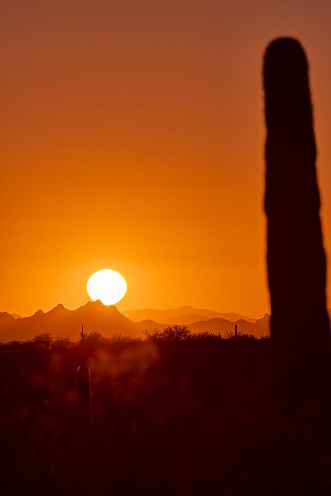 Sun and Cactus - Saguaro National Park