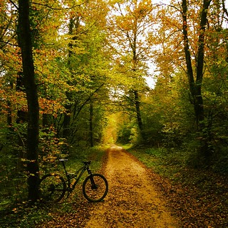#herbstride #herbst #liveontour #specialized #camber_expert_evo #mtb #vtt #mountainbike #sommerau