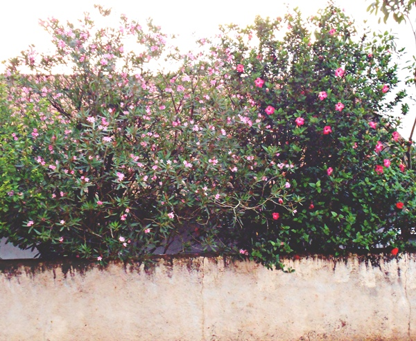 primavera, muro, vizinho, flores