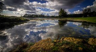 Serpentine Reflections