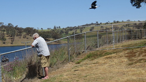 Baiting magpies by Jim