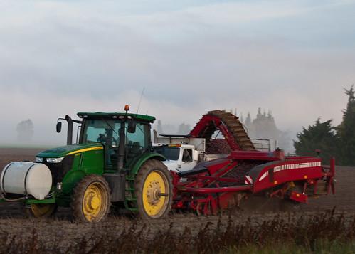 10-11-14 Digging Potatoes