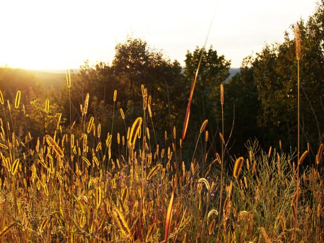 ny_sept14_meadow
