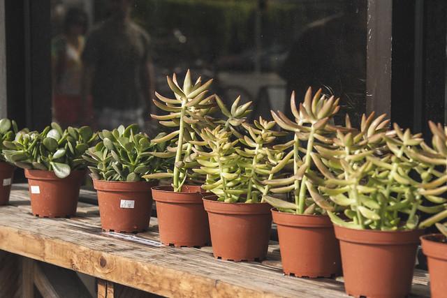 Succulents, Austin, TX