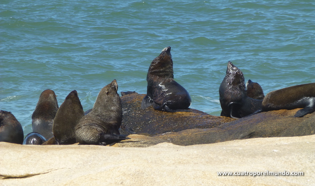 Leones marinos descansando en las rocas de Cabo Polonio