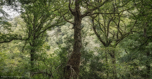 trees brown green wales woodland unitedkingdom sony a77 llangoedmor sonyalpha andyhough slta77 sonyzeissdt1680 andyhoughphotography