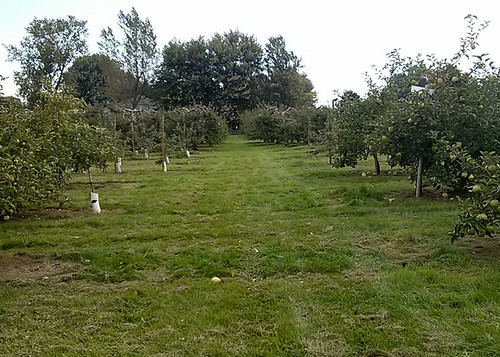 Myers Apple Farm Visit