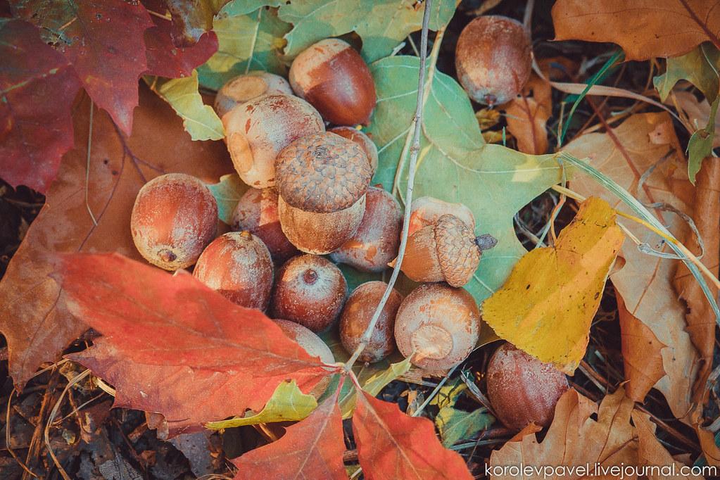 Autumn-164
