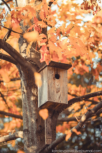Autumn-127