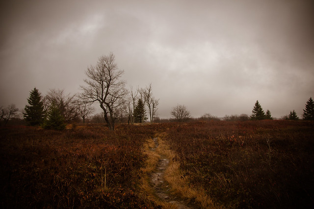 Dolly Sods-5