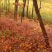 Gentle Autumn Colors