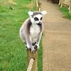 #lemur? #monkey? #whatever.