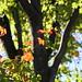 Auutmn Leaves