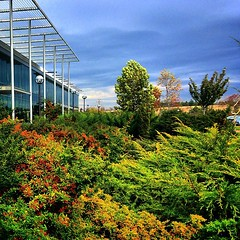 Aimless 🍃🍁🍂🏤 #metu #technopolis #silicon