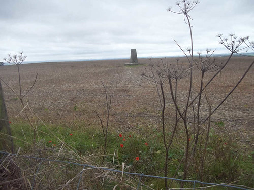 Trig Point with poppies