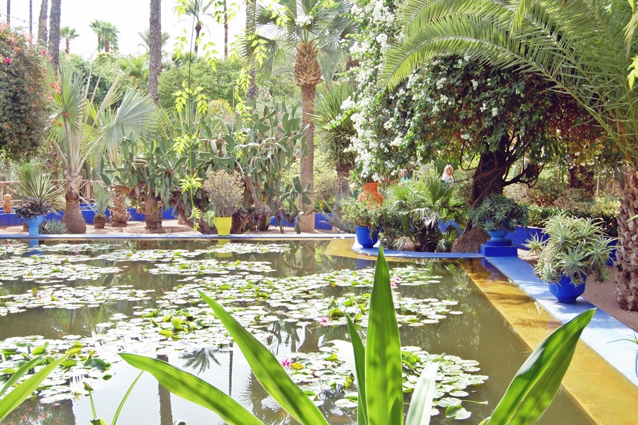 Jardin Majorelle (8)