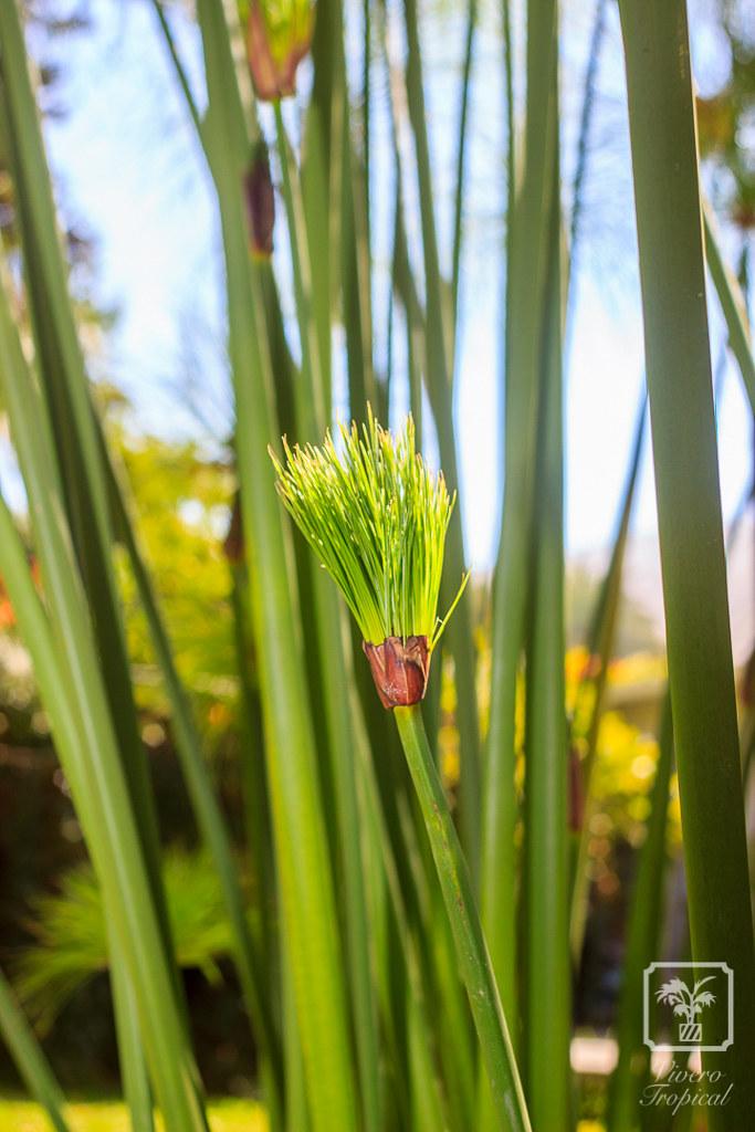 vivero tropical plantas ex ticas