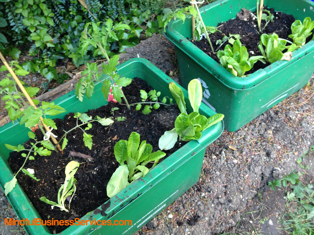 2013 06 02 planted up recycling boxes