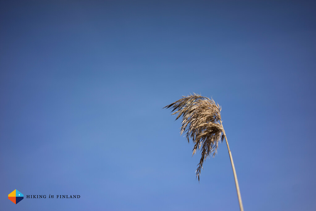 Sony A7R - Reed