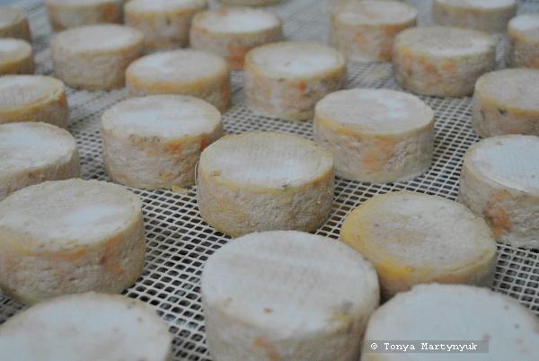 11 - мастер-класс по приготовлению сыра - традиции Португалии
