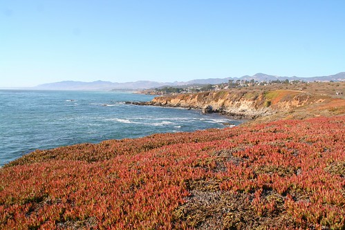 Colors Abound on the Cambria Coast