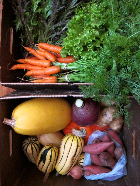 Fall Bounty from Orange Circle Farm