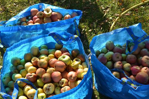 äpple14