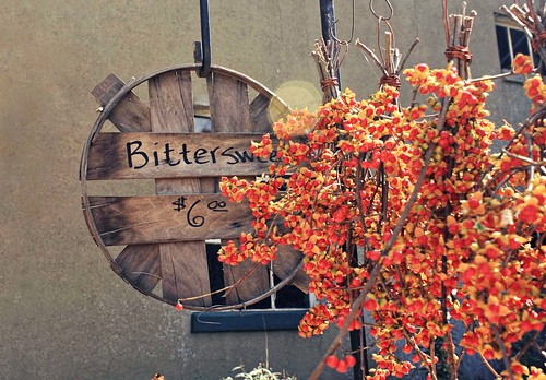 Visit To The Cider Mill: Bittersweet
