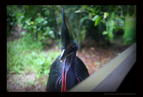 park color bird birds animal fauna singapore view jurong cassowary singpaore