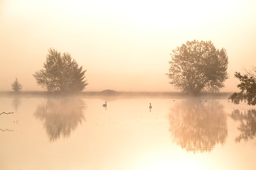 lake france reflection tree sunrise swan nikon ngc lac bourgogne arbre cygne leveedesoleil d3100