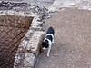 Lecce, Roman amphitheater 70: cat