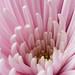 Heart of Light Pink