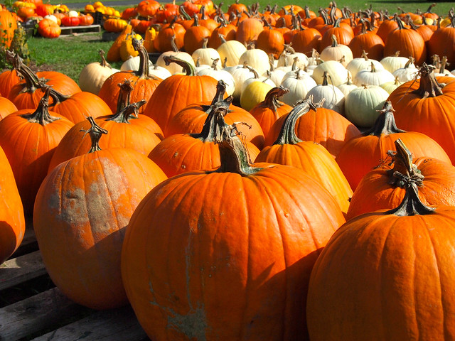 Pumpkins on the Old Mission Peninsula