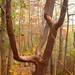 Divining Tree
