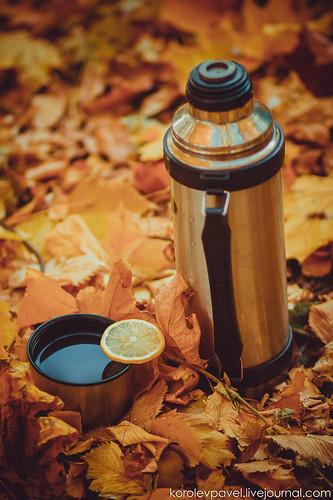 Autumn-274